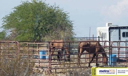 Social Media Posts Lead To Possible Horse Abuse Investigation