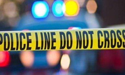 Three Burros Killed On Parkway