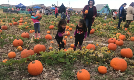 DIG-ging In For A Pumpkin Proves Fun For All Ages