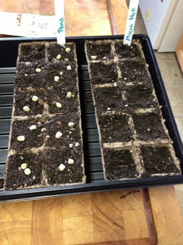 Seed ready for soil and water!