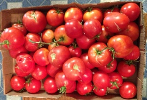 The summer of glorious tomatoes. My inner canner is so stoked.