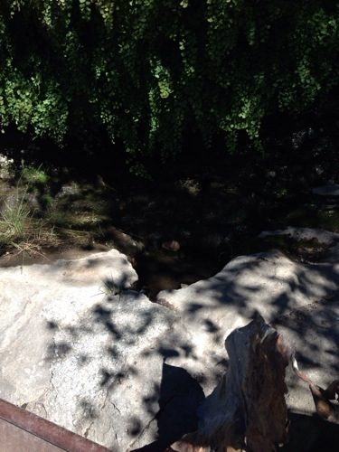This is a spring where the Native American's carved  a drinking basin (sorry for the crappy picture).