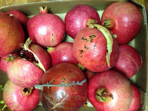 Pomegranates are pretty.