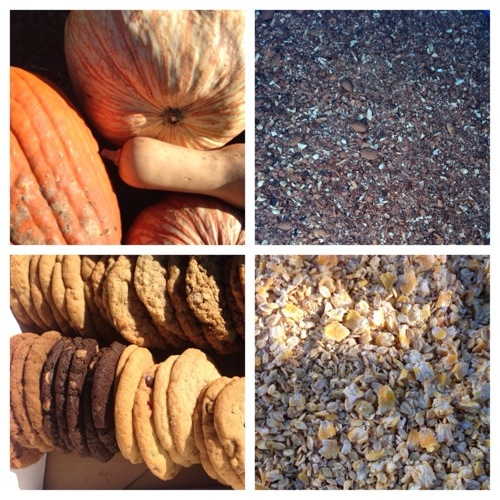 Pumpkins, almond parts, cookies, and rolled barely/corn.