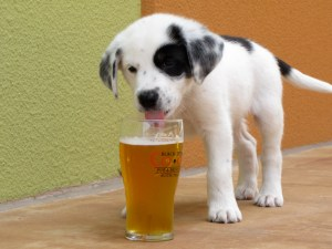 Dog-Daze