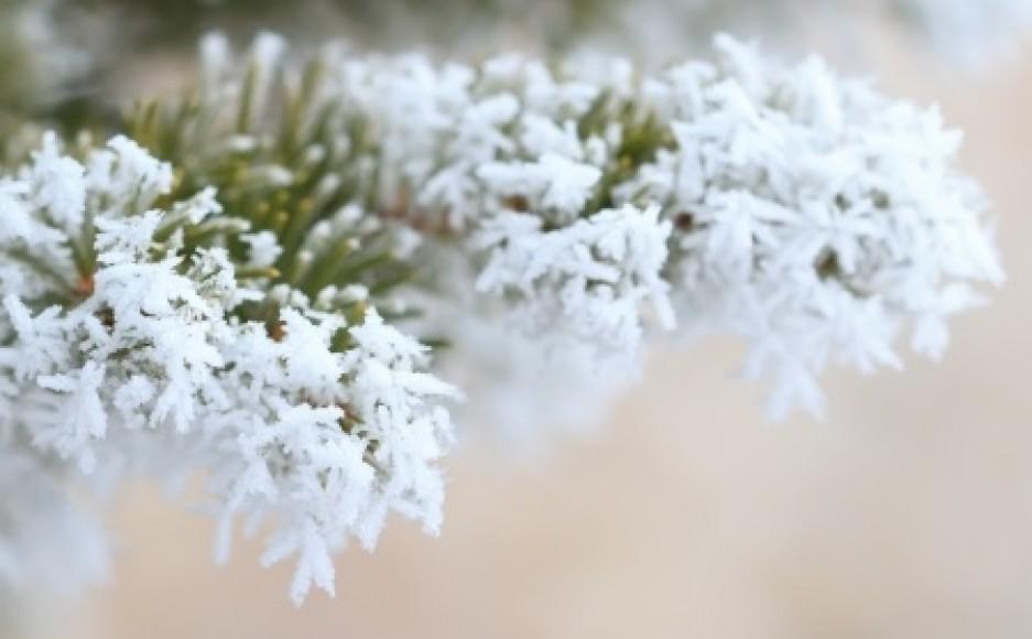 cropped-winter_green.jpg