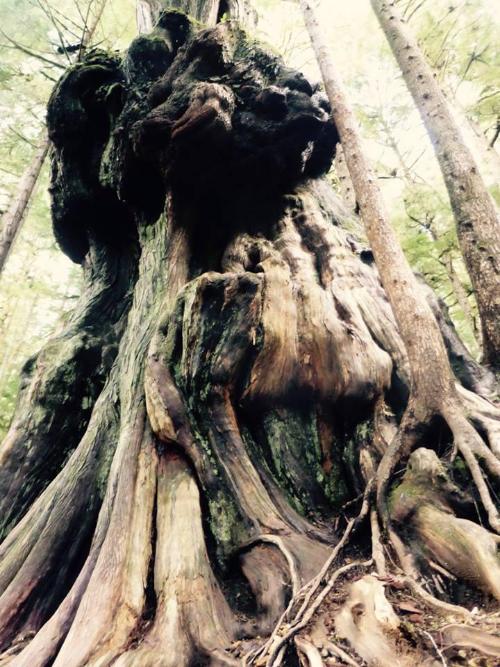 avatar grove gnarliest tree
