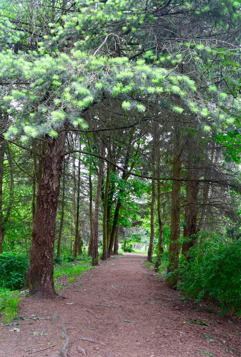 Walking in the woods - listening to birds, stop and breathe