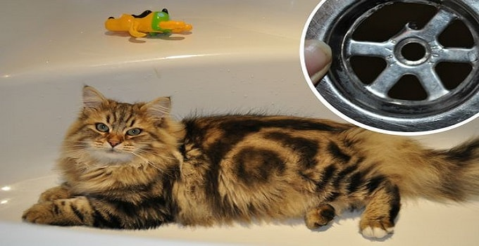 Firefighters Dispatched To Help Kitten With Its Paw Stuck