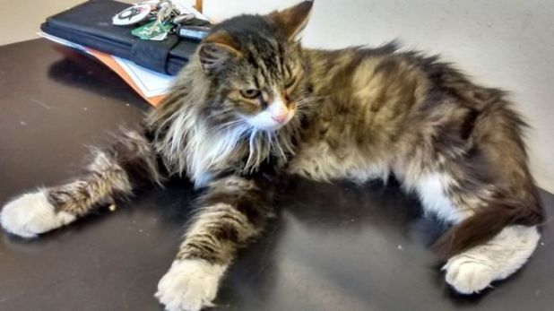 Buddy went missing in October from Hucknall in Nottinghamshire but was found in Hounslow - 150 miles (240km) away in London
