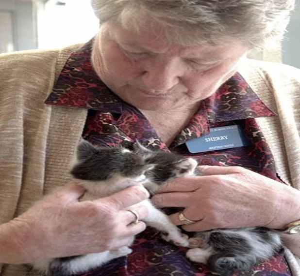 """Sherry Chapman, a retired veterinarian assistant from Lakewood, aptly nicknamed """"The Cat Whisperer"""" said the program is always looking for volunteers, though she raves about her compassionate, committed volunteer staff of 14."""