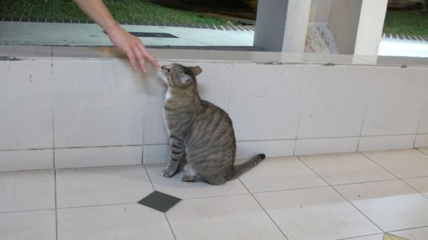 Their ease around humans makes the cats an easy target for potential assailants