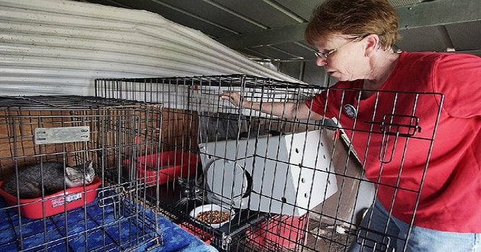 "PHOTO BY ARKANSAS DEMOCRAT-GAZETTE / MITCHELL PE MASILUN Karen Oxner of Little Rock, a volunteer for the Little Rock Animal Village, places feral cats in cages Friday on a farm in England. The relocation of the cats is part of the Animal Village's ""working cats"" pilot program, which places the cats in new homes or businesses where they can help control pests."