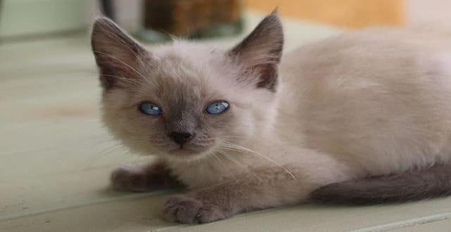 (June 13, 2016)FieldHaven Feline Center