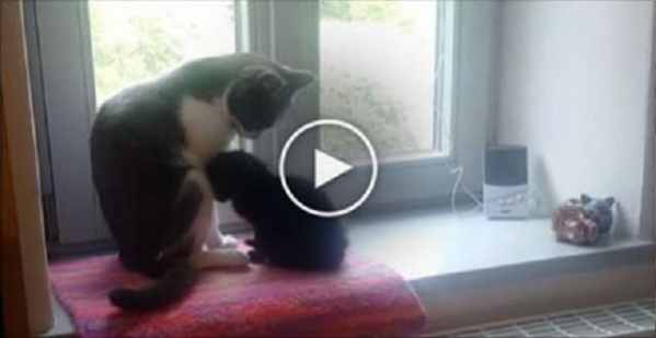 They Introduced An Abandoned Kitten To This Cat, Now Watch What Happens When They Meet! - VIDEO!