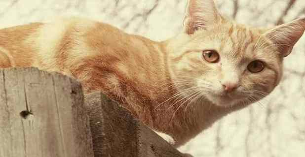 Moses is just one of the 50 cats that have been reported missing in the New Zealand town of Timaru in 2016. Photograph: Ashleigh Hicks