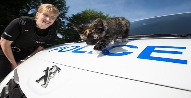 The kitten stowed away in PC Rachel Baggaley's police car.