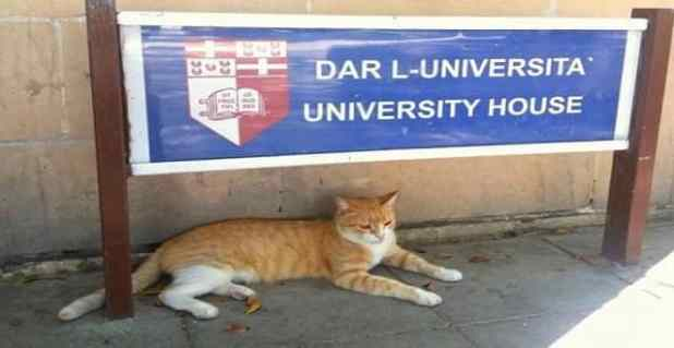 Gigi the cat had become something of a mascot for the University grounds