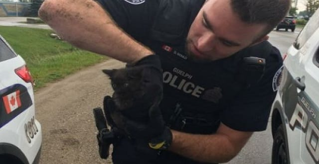 A Guelph police officer holds a tiny kitten that officers managed to coax out of a vehicle's engine using their lunch. (Guelph Police Service)
