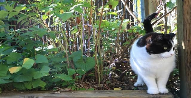 Terreur was a feral cat that was successfully socialized by volunteers. (Kalina Laframboise/CBC)
