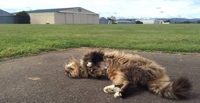 Gypsy the cat basks in the late morning sunshine next to Hood Aerodrome