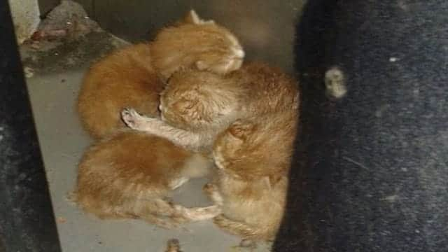 The ginger kittens were heard crying from the back of one of the machines
