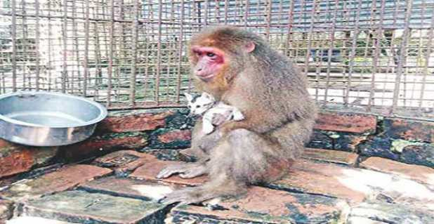 A monkey cuddles a kitten at a birds' breeding centre in Moulvibazar's Sreemangal upazila.