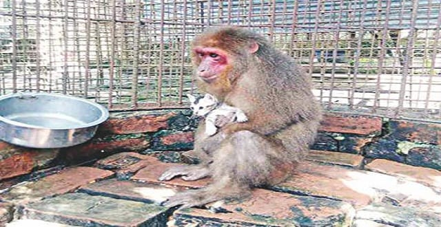 A monkey cuddles a kitten at a birds' breeding centre in Moulvibazar's Sreemangal upazila.