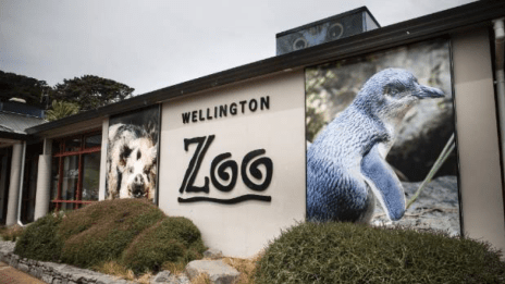 Wellington-Zoo-–-Supporting-Retail-Merchandising-and-Marketing