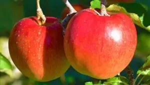 リンゴ返礼品ランキング つがる