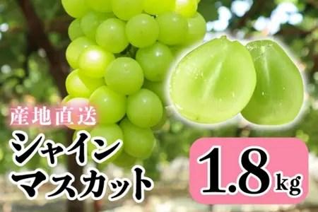 山梨県産シャインマスカット2~4房(約1.8kg)