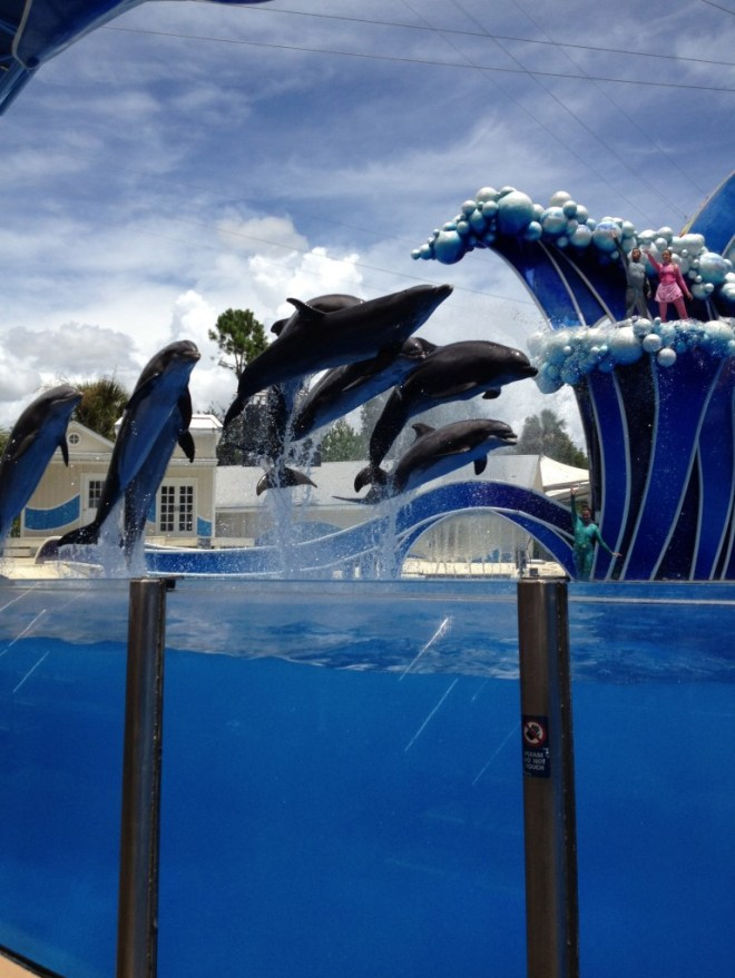 Dolphins SeaWorld