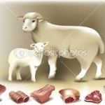 Lamb and Mutton for sausage