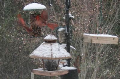 cardinals3s