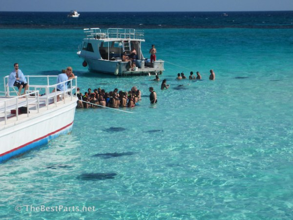Grand Cayman Stingray City1