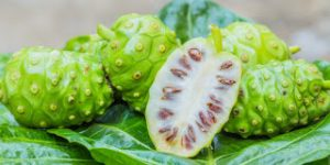 Polyphenols and Antioxidant Activity of Noni Fruit