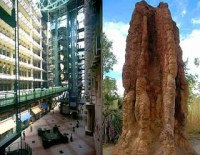 The phenomenon of existence of skyscraper buildings by land termites (Nasutitermes triode) the building innovator from Wasur National Park Merauke Papua