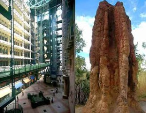 The Phenomenon Of Skyscraper Existence Buildings by Land Termites the building innovator from Wasur National Park Merauke Papua