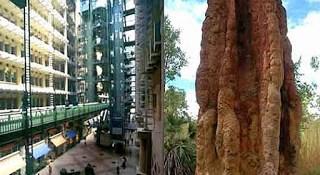 The phenomenon of existence of skyscraper buildings by land termites (Nasutitermes triode) the building innovator from Wasur National Park Merauke Papua