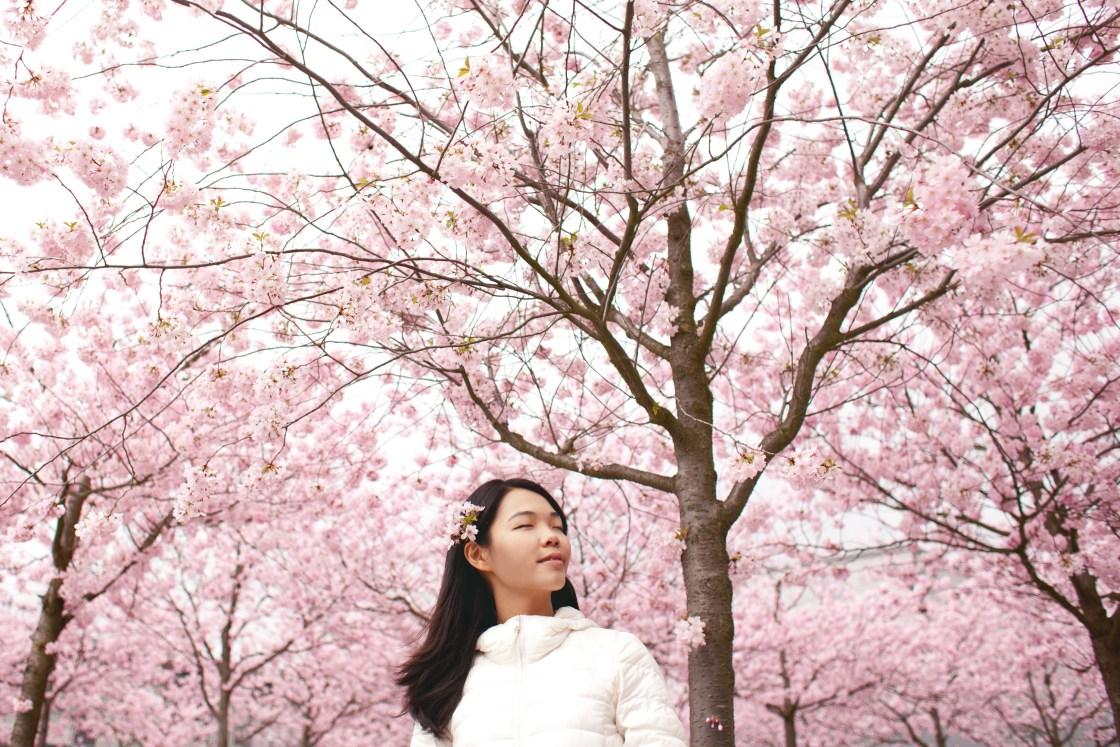 Cherry Blossom Festival Japan Hanami Sakura The Better Places Travel Blog