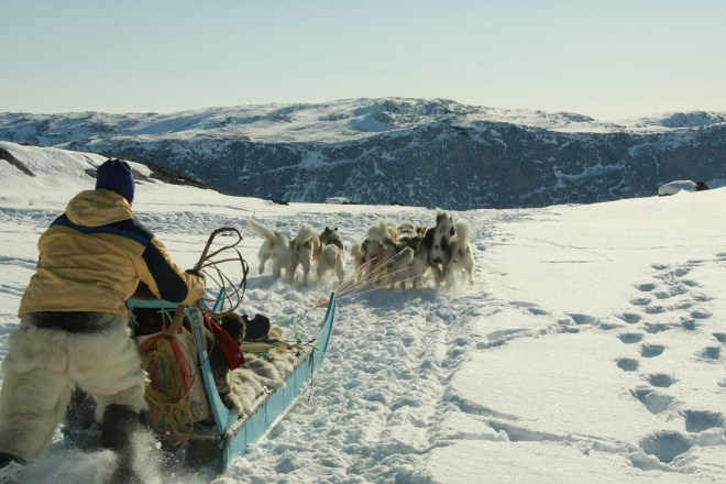 greenland_thebetterplaces_dogsledge_motion.jpg
