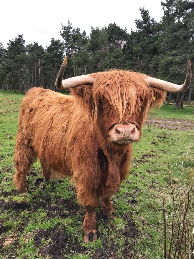 Thebetterplaces_train_scotland_animals.jpg