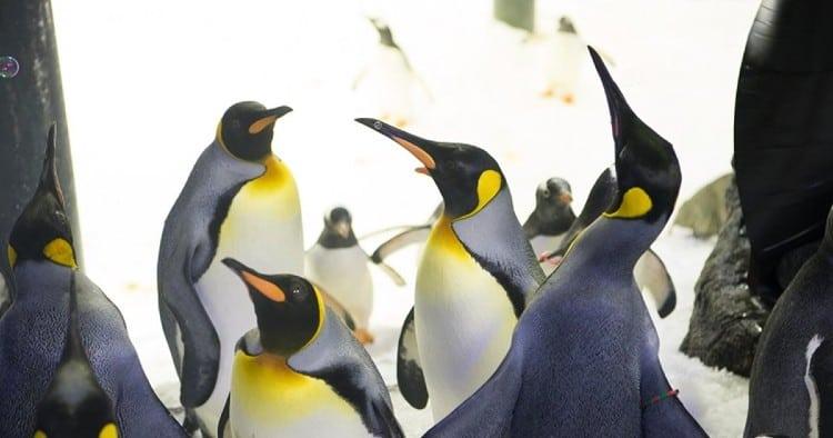 Penguin Talk at Melbourne Aquarium