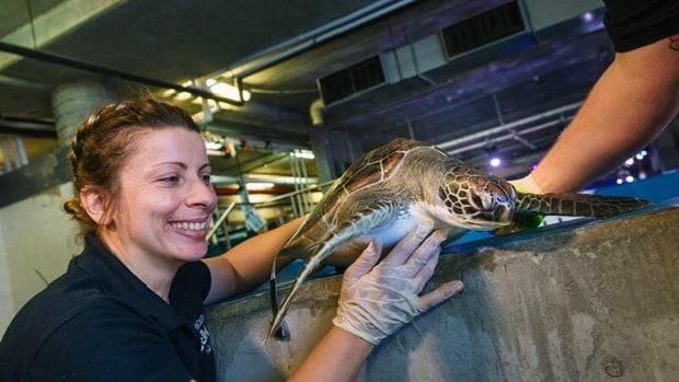 Turtle feed at Melbourne Aquarium