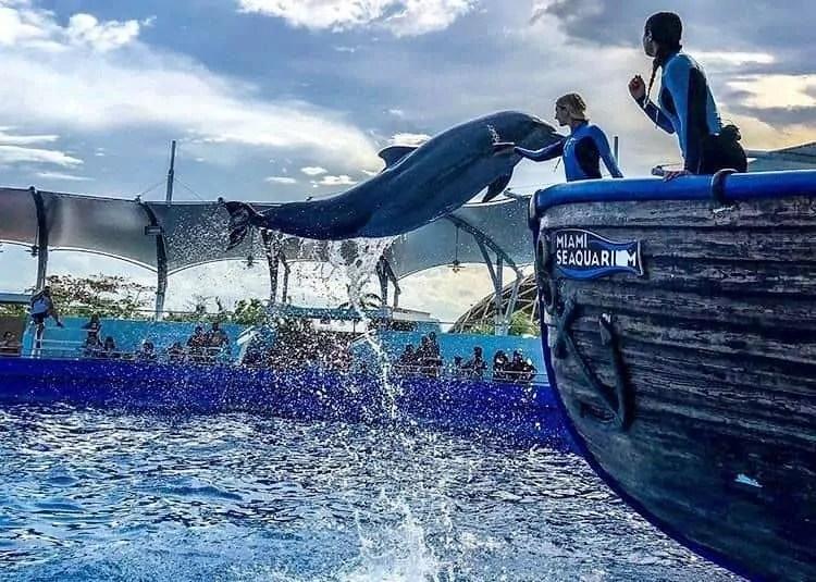 Top Deck Dolphin show at Miami Seaquarium