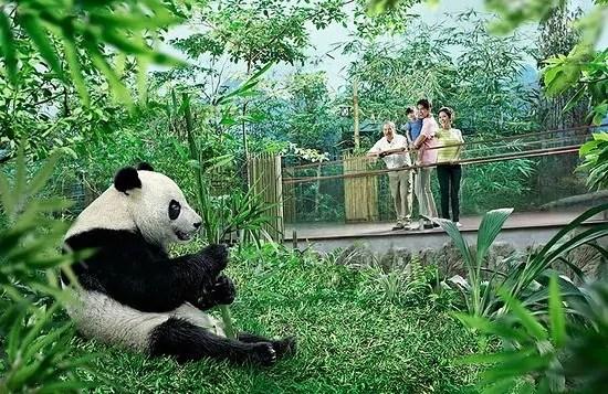 Giant Panda Forest at Singapore River Safari