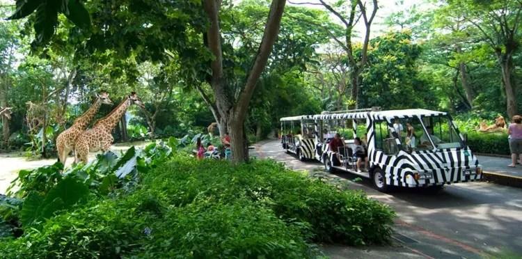 Singapore Zoo tram