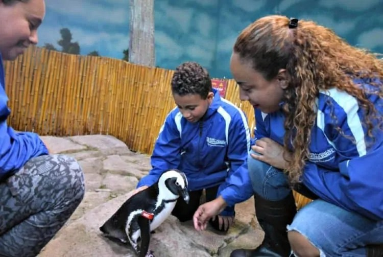Miami Seaquarium Meet the Penguin