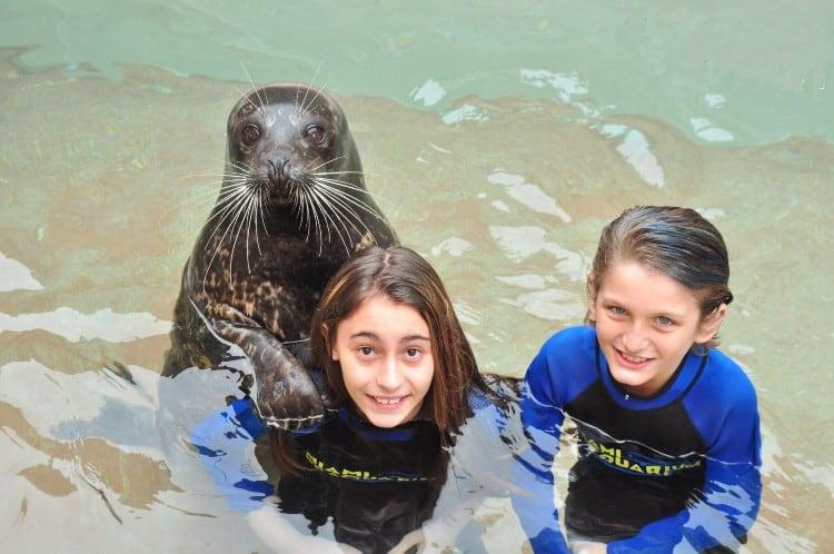 Miami Seaquarium Seal Swim