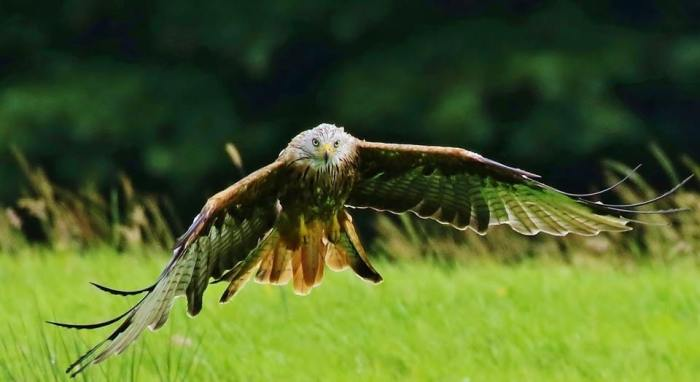 Allan Brown's stunning shot of a red kite at Argaty, Perthshire